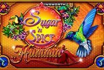 Sugar n Spice Hummin